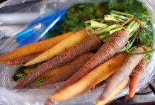 colorful-carrots