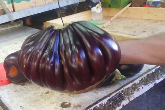 weird eggplant1