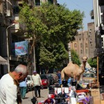 3-market-camel
