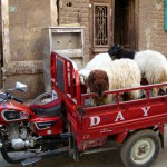 8-sheep-cart-luxor