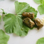 stuffed-mallow-nettle